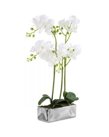 Fiori White Potted Phalaenopsis - 50cm