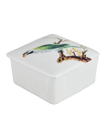 Green Parrot Square Box