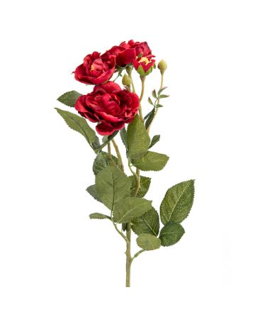 Red Rose Stem