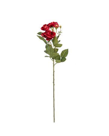 Red Rose Stem