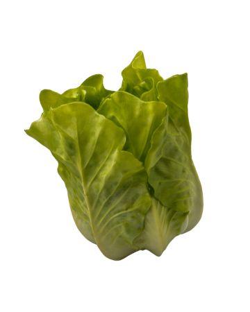 Lettuce - Escarole