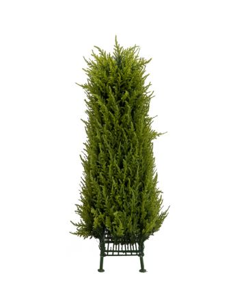 Juniper Topiary Obelisk - Short