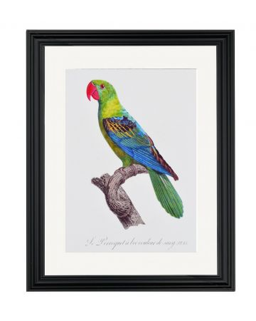 Large Parrot III - Jacques Barraband