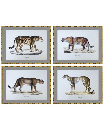 Big Cats Set of 4 Prints in Bamboo