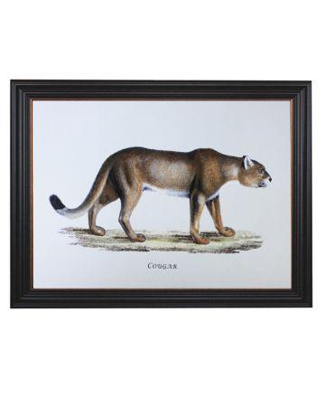 Framed Cougar Print
