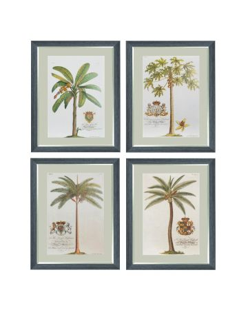 Georg Dionysius Ehret - Set of 4 Tropical Tree Prints