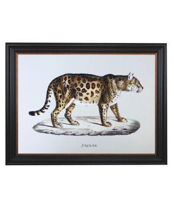 Framed Jaguar Print