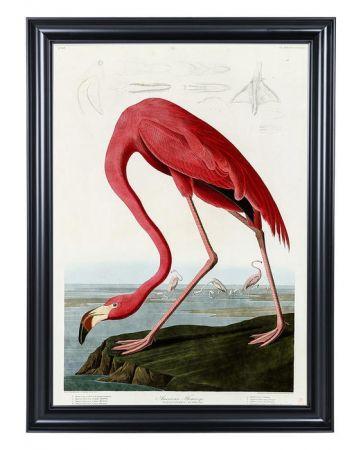 Audubon's American Flamingo