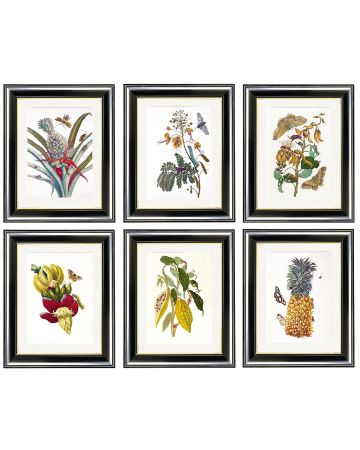 Maria Sibylla Merian - Set of 6 Botanical Prints