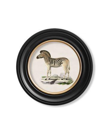Round Zebra print - 44cm