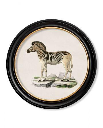 Round Zebra print - 70cm