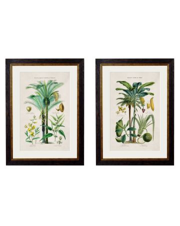 Study of Tropical Plants Set of 2 Prints