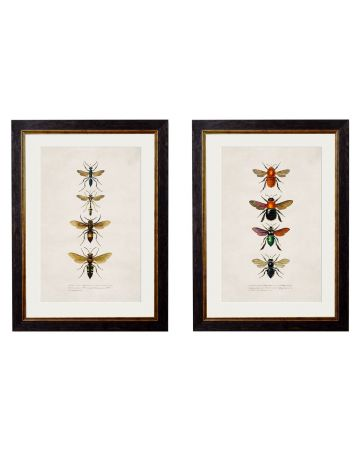 Entomology Set of 2 Prints - Bees & Wasps