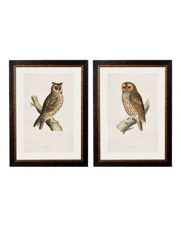 Owls Set of 2 Prints