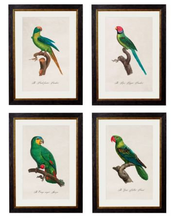 C.1800'S Collection of Parrots - Set of 4