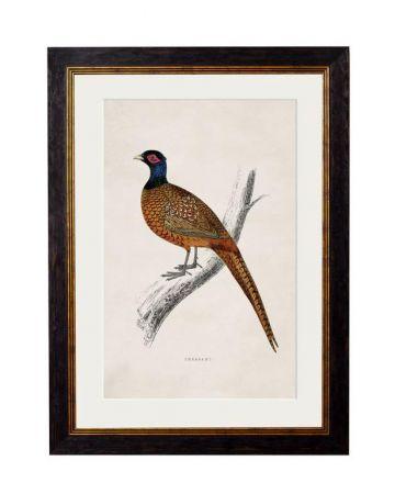 Pheasant Print - Small