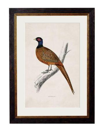 Pheasant Print - Large