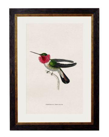 Tricolor Hummingbird Print