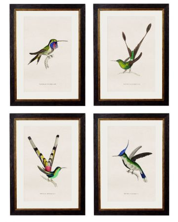 Collection of Hummingbirds - Set of 4