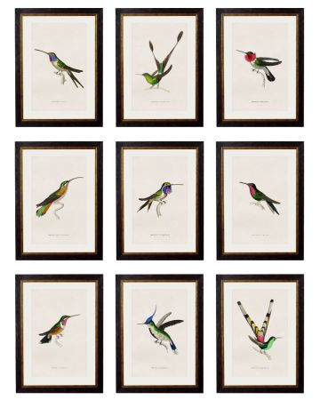 Collection of Hummingbirds - Set of 9