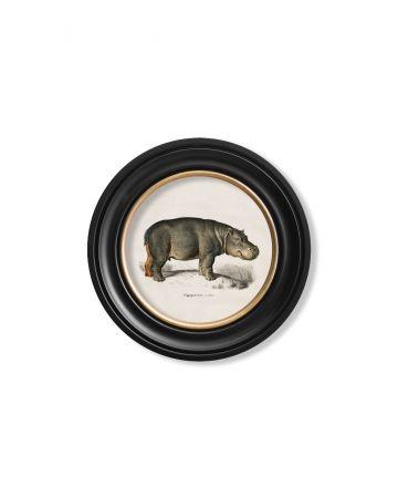 Round Hippo Print - 44cm