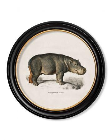 Round Hippo Print - 70cm