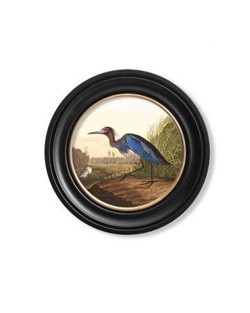 Audubon's Blue Heron Round Print - 44cm