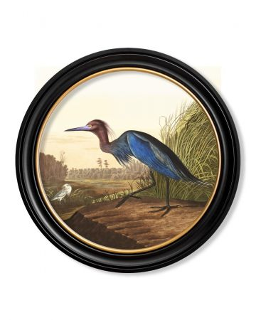 Audubon's Blue Heron Round Print - 70cm