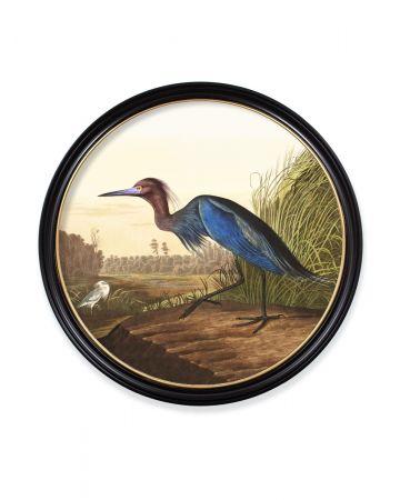 Audubon's Blue Heron Round Print - 96cm