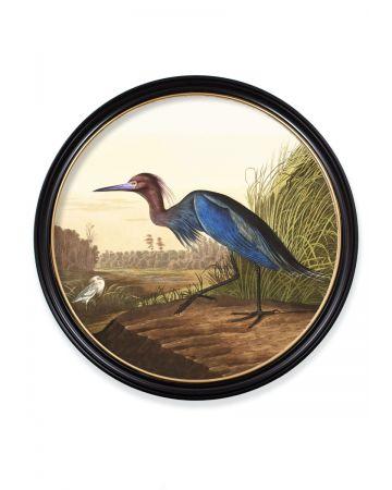 Audubon's Blue Heron Round Print - 120cm