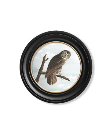 Audubon's Owl Round Print - 44cm