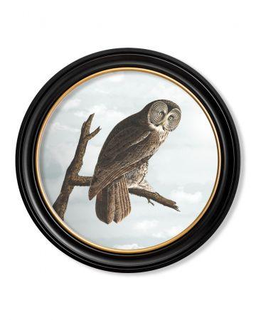 Audubon's Owl Round Print - 70cm
