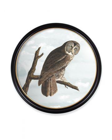 Audubon's Owl Round Print - 96cm