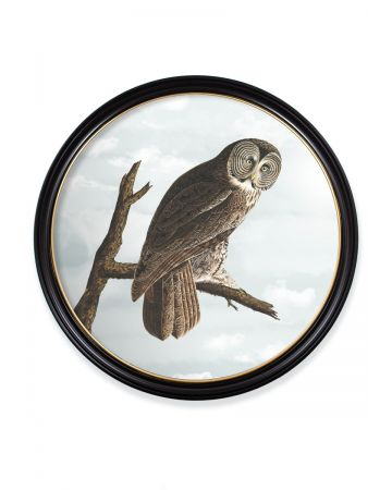 Audubon's Owl Round Print - 120cm