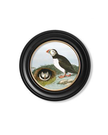 Audubon's Puffin Round Print - 44cm