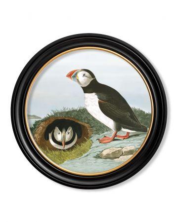 Audubon's Puffin Round Print - 70cm