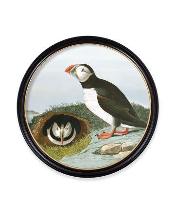 Audubon's Puffin Round Print - 96cm