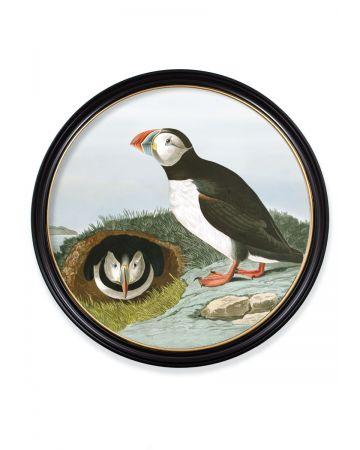Audubon's Puffin Round Print - 120cm