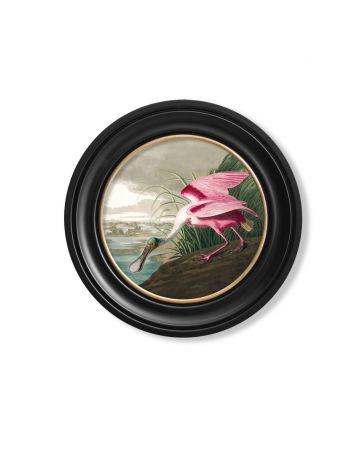 Audubon's Roseate Spoonbill Round Print - 44cm