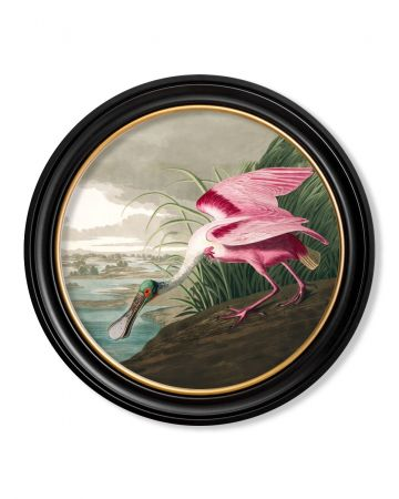 Audubon's Roseate Spoonbill Round Print - 70cm