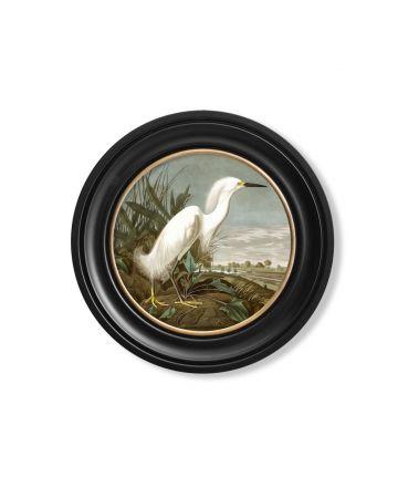 Audubon's Snowy Heron Round Print - 44cm