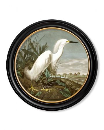 Audubon's Snowy Heron Round Print - 70cm