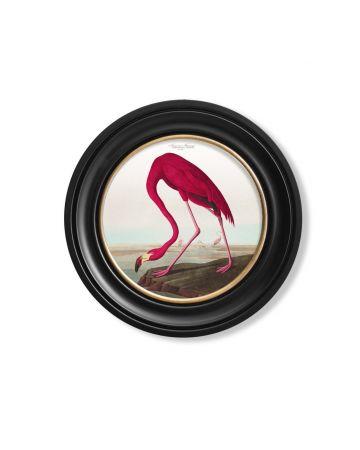 Audubon's American Flamingo Round Print - 44cm