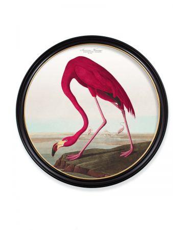 Audubon's American Flamingo Round Print - 120cm
