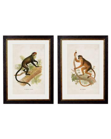 Monkeys II Set of 2 Prints
