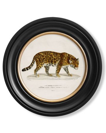 C.1836 Small Round Jaguar
