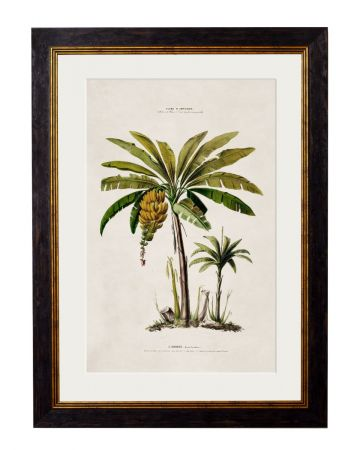 C.1843 Large Banana Palm Print