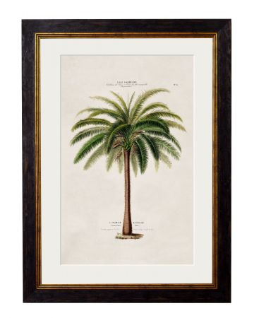 C.1843 Small Macaw Palm Tree Print