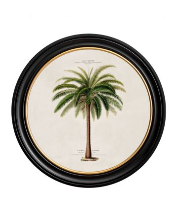 C.1843 Medium Round Macaw Palm Print
