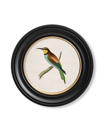 Bee Eater Print Small